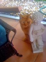 hobbs-cat