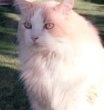 our-cat-milo